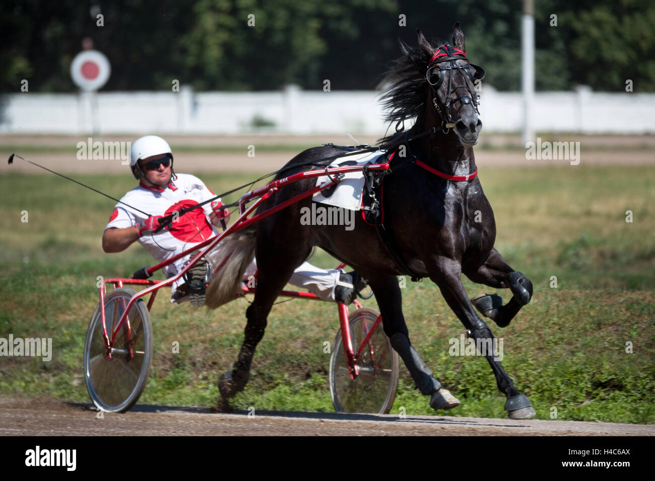 A trotting-horse race dedicated at the Moscow racecourse, Russia - Stock Image