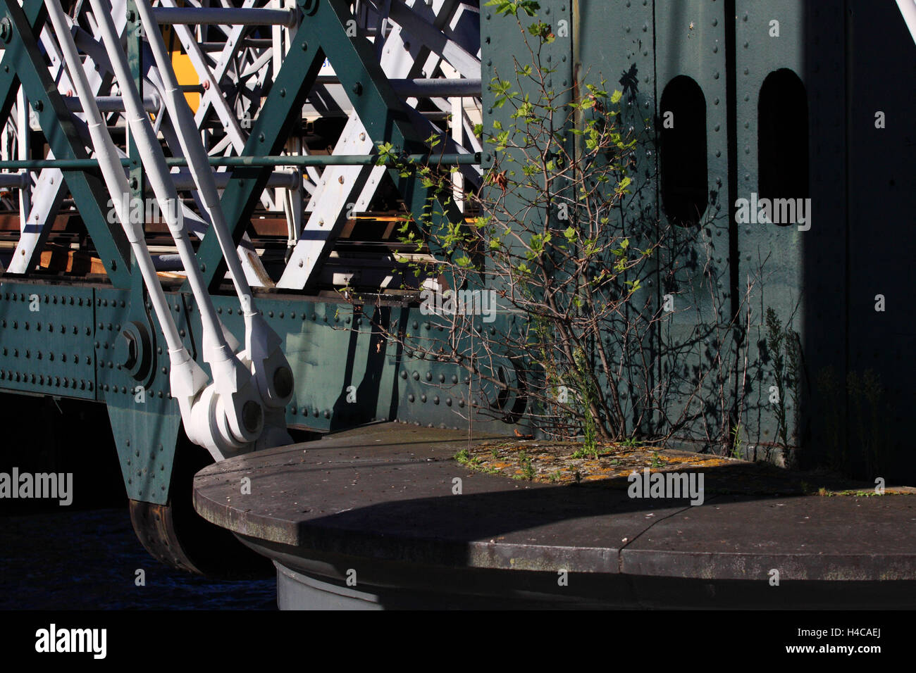 A shrub grows out of the structure of The Golden Jubilee Bridge, which spans the River Thames in London, England Stock Photo