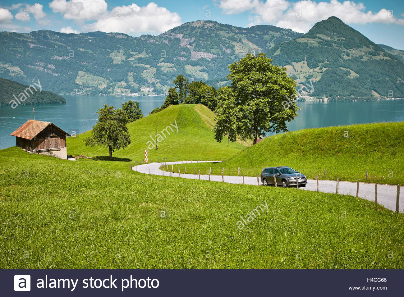 VW GOLF Estate car in front of the Vierwaldstätter lake with cymbal reeds in Switzerland - Stock Image