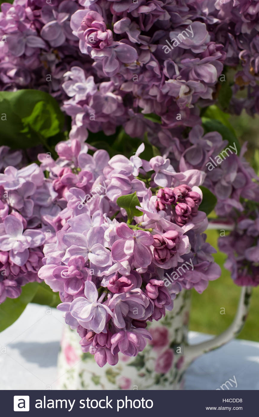 Vase of Lilac flowers - Stock Image