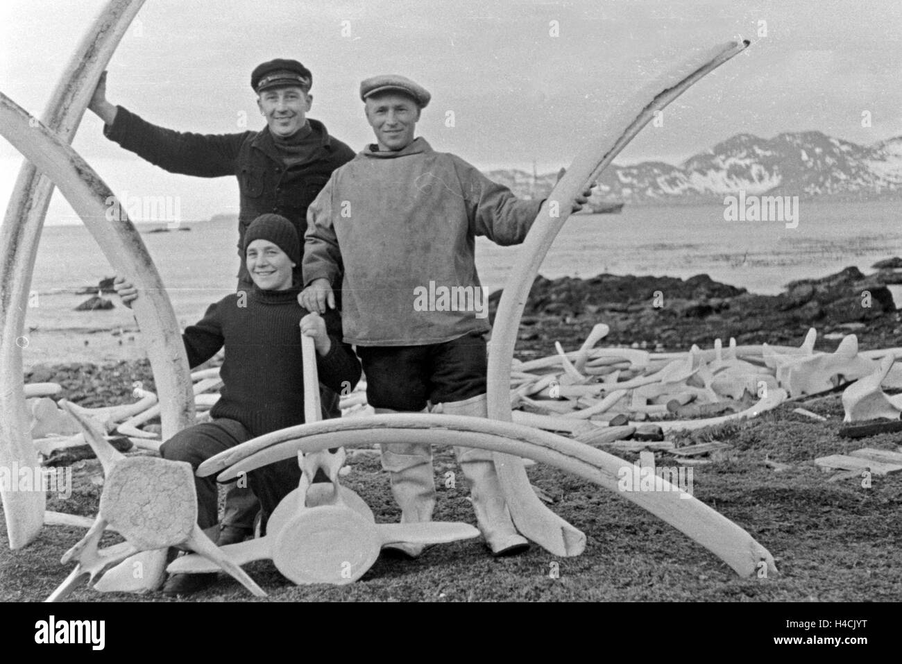 Drei Männer der Besatzung des Walfangfabrikschiffs 'Jan Wellem' mit Walfischknochen am Ufer der Insel - Stock Image