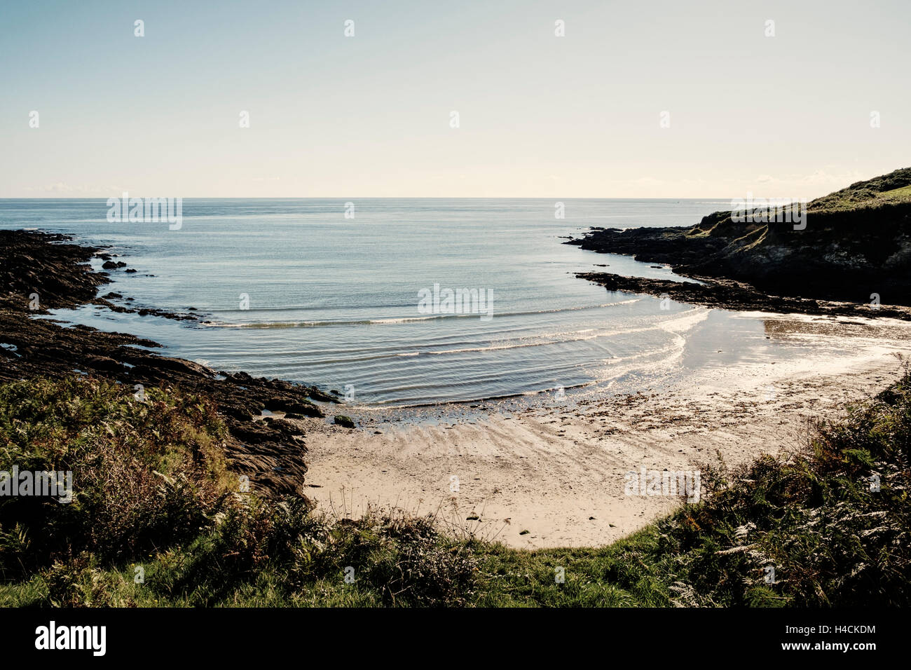 Cornwall beaches - Sandy beach and cove and calm ocean, Cornwall, England, UK - Stock Image