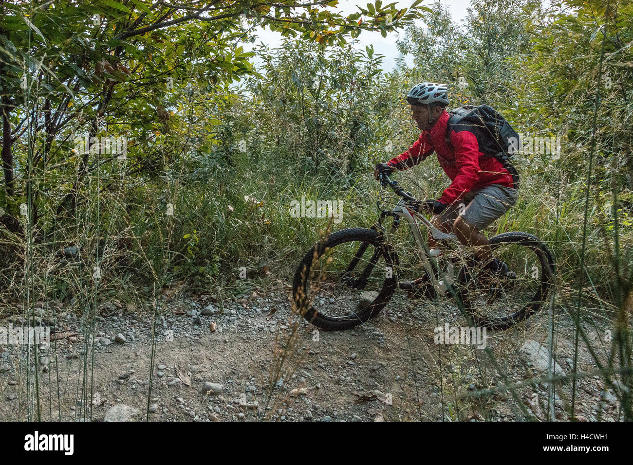 Mountain biker riding in the woods trail riding in Italy biking through nature cycling woodland trails park outdoors - Stock Image