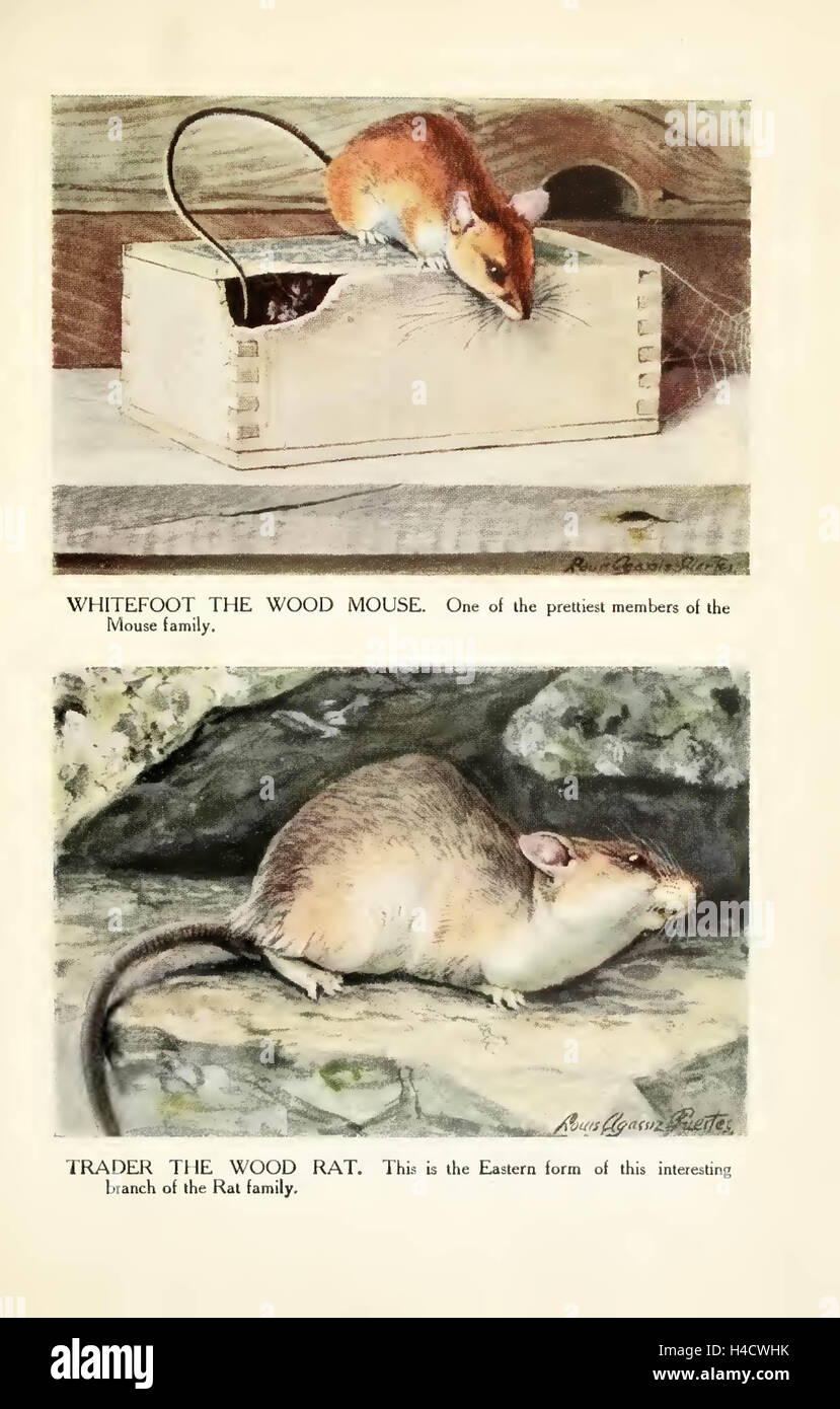 The Burgess animal book for children by Thornton W. Burgess ; with  illustrations by Louis Agassiz Fuertes. Published 1920 by Lit