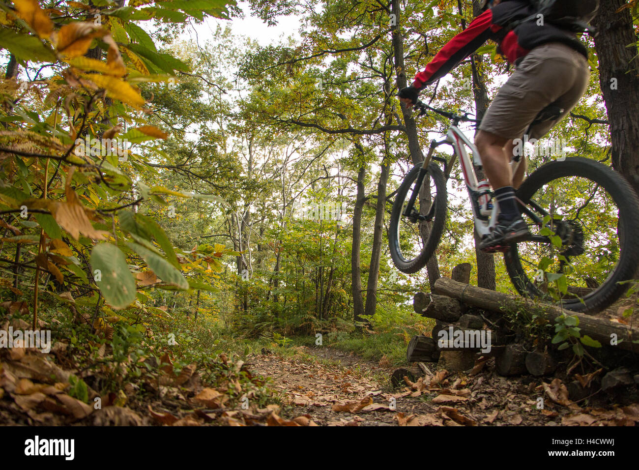Mountain Bike Jump biker in the woods of the Serra Morenica woodland hill and trails in Piemonte Italy. Mountain - Stock Image