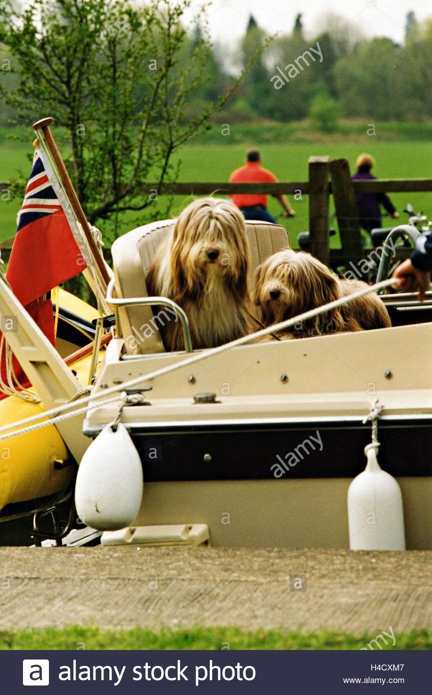dogs in a boat Stock Photo