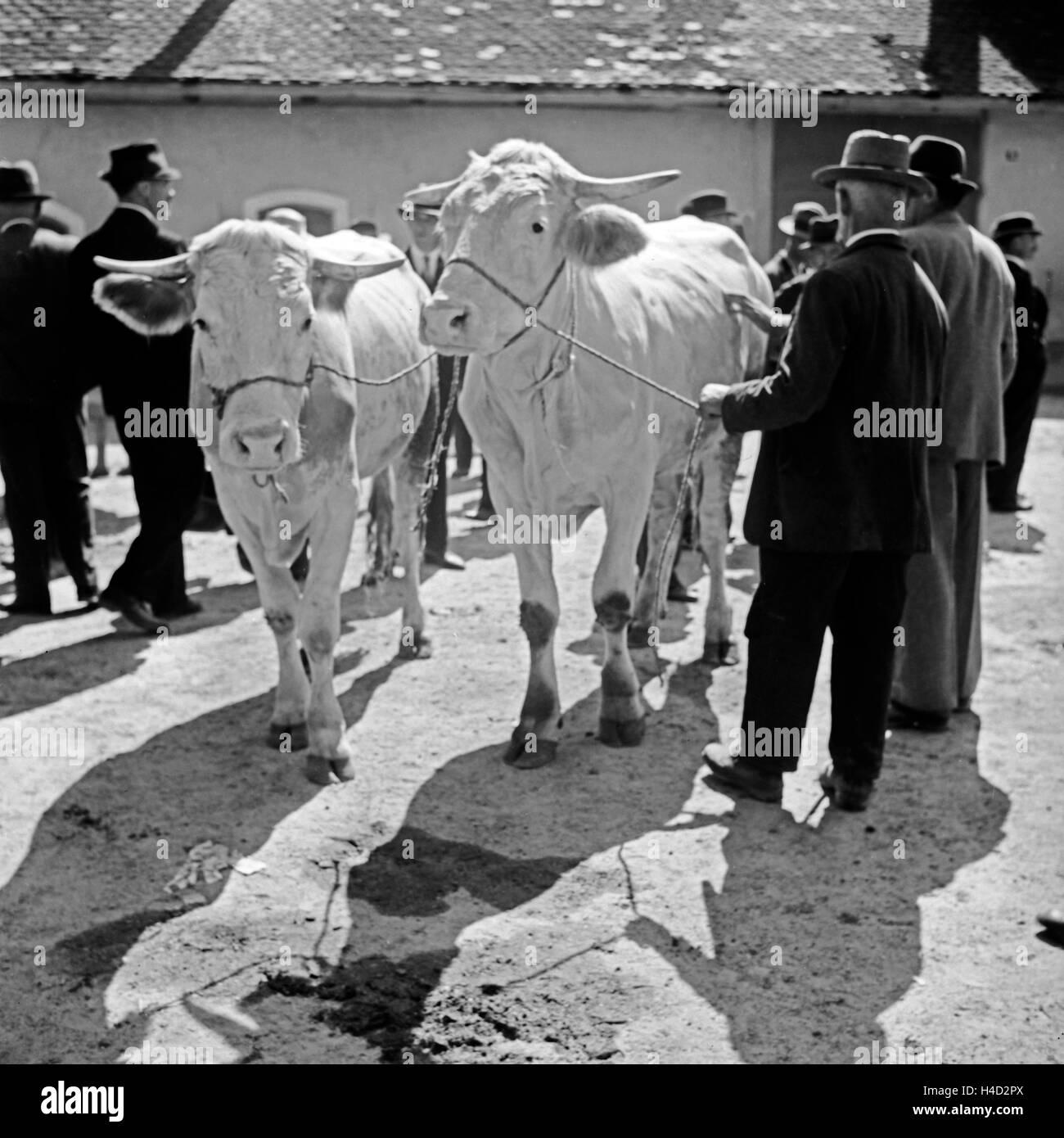 Bauern handeln auf dem Viehmarkt den optimalen Preis aus, Deutschland 1930er Jahre. Farmers negotiating the best Stock Photo