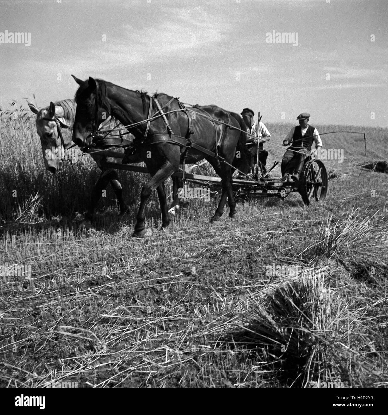 Getreideernte im Altmühltal, Deutschland 1930er Jahre. Cereal harvest at Altmuehltal valley, Germany 1930s. - Stock Image
