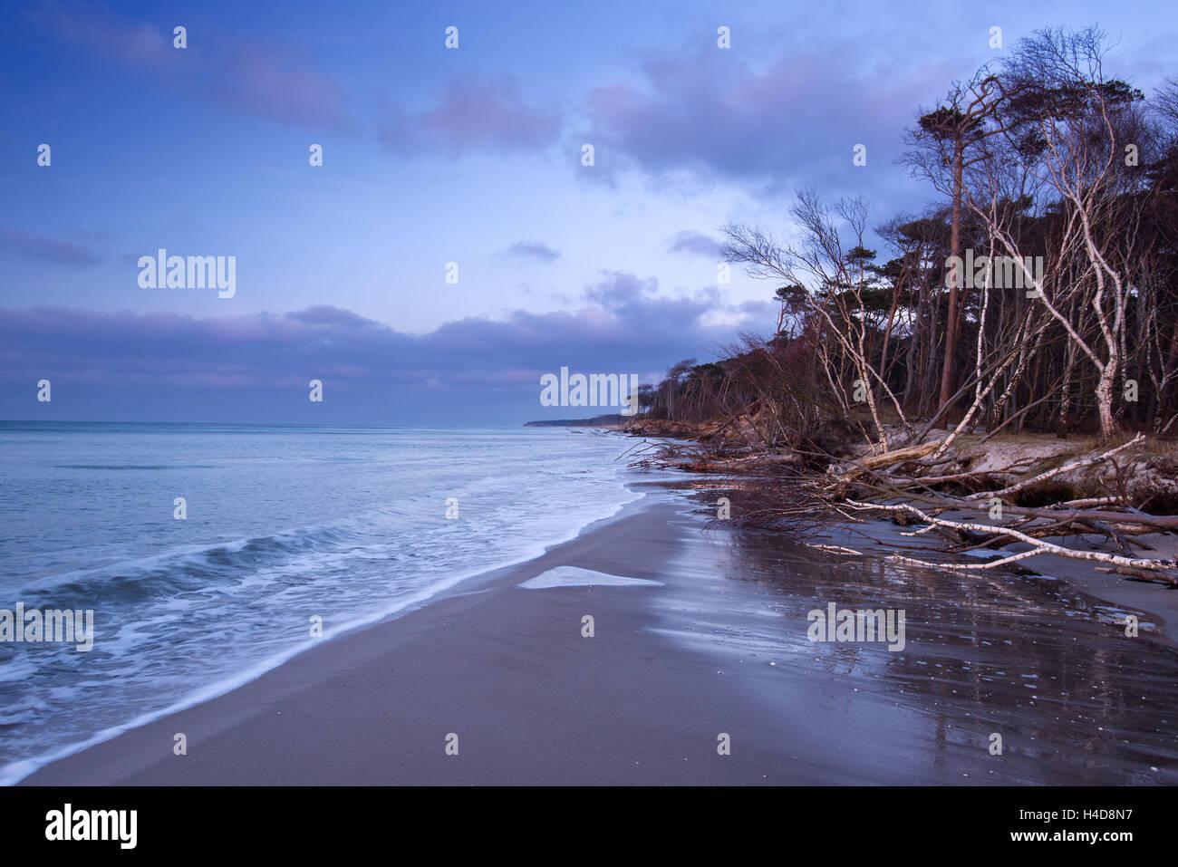 West beach, blue hour, coast, the Baltic Sea, Mecklenburg-West Pomerania, Germany, Europe - Stock Image
