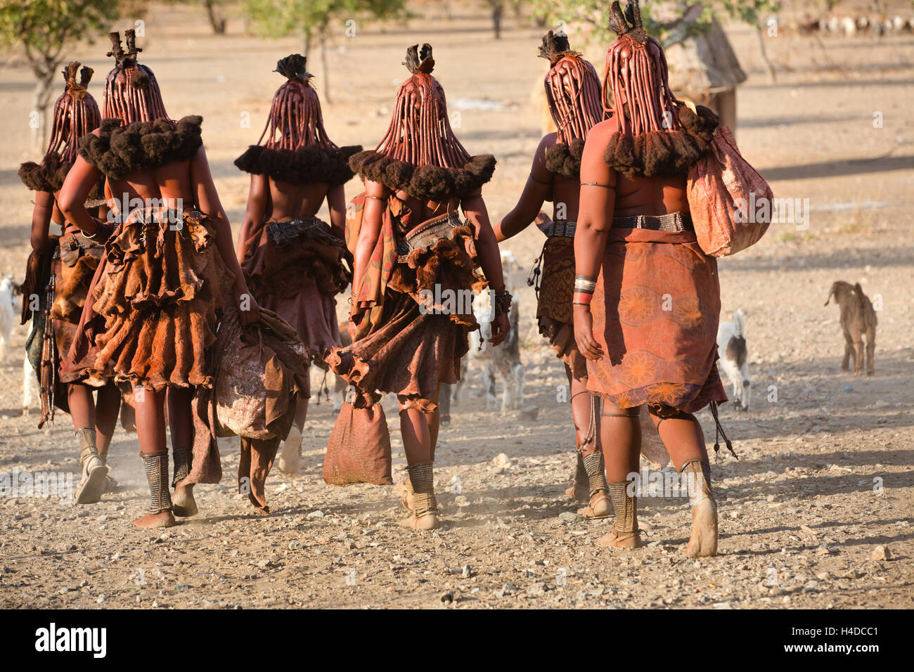 Himba women go back to the village near Opuwo town in Namibia, South Africa - Stock Image