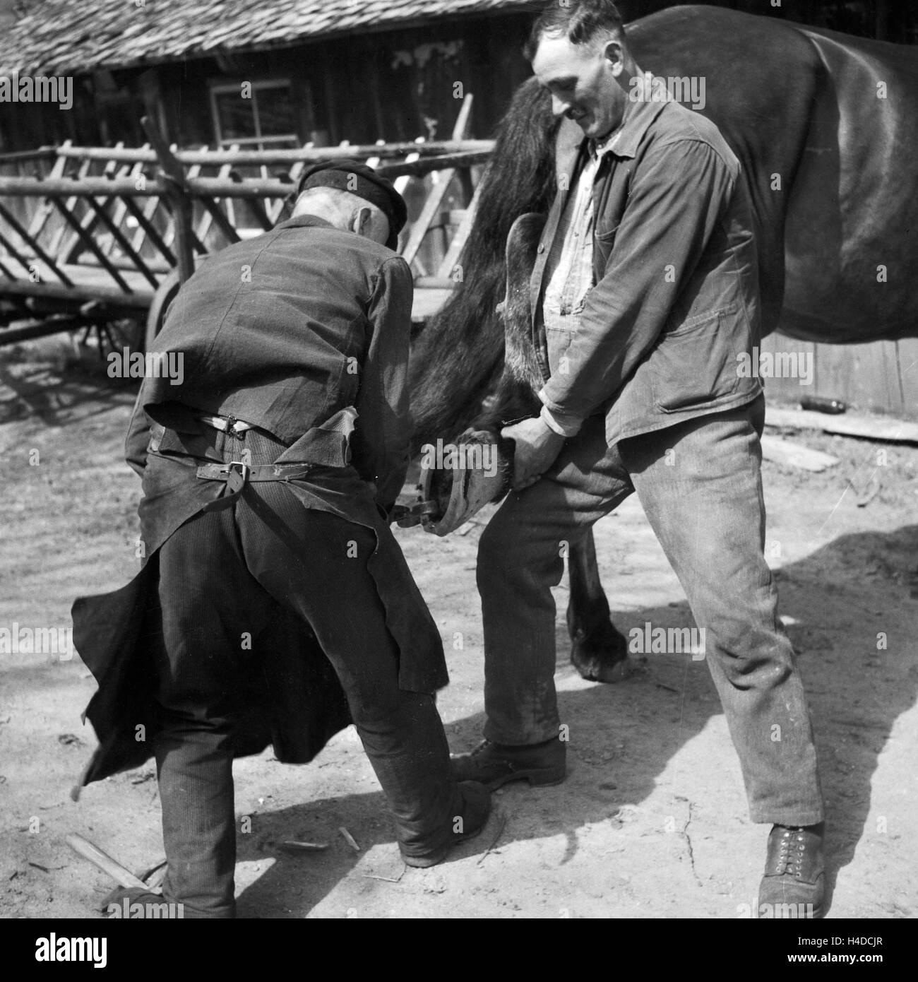 Ein Hufschmied bestückt ein Pferd mit neuen Hufeisen, Deutschland 1930er Jahre. A blacksmith putting new horseshoes - Stock Image