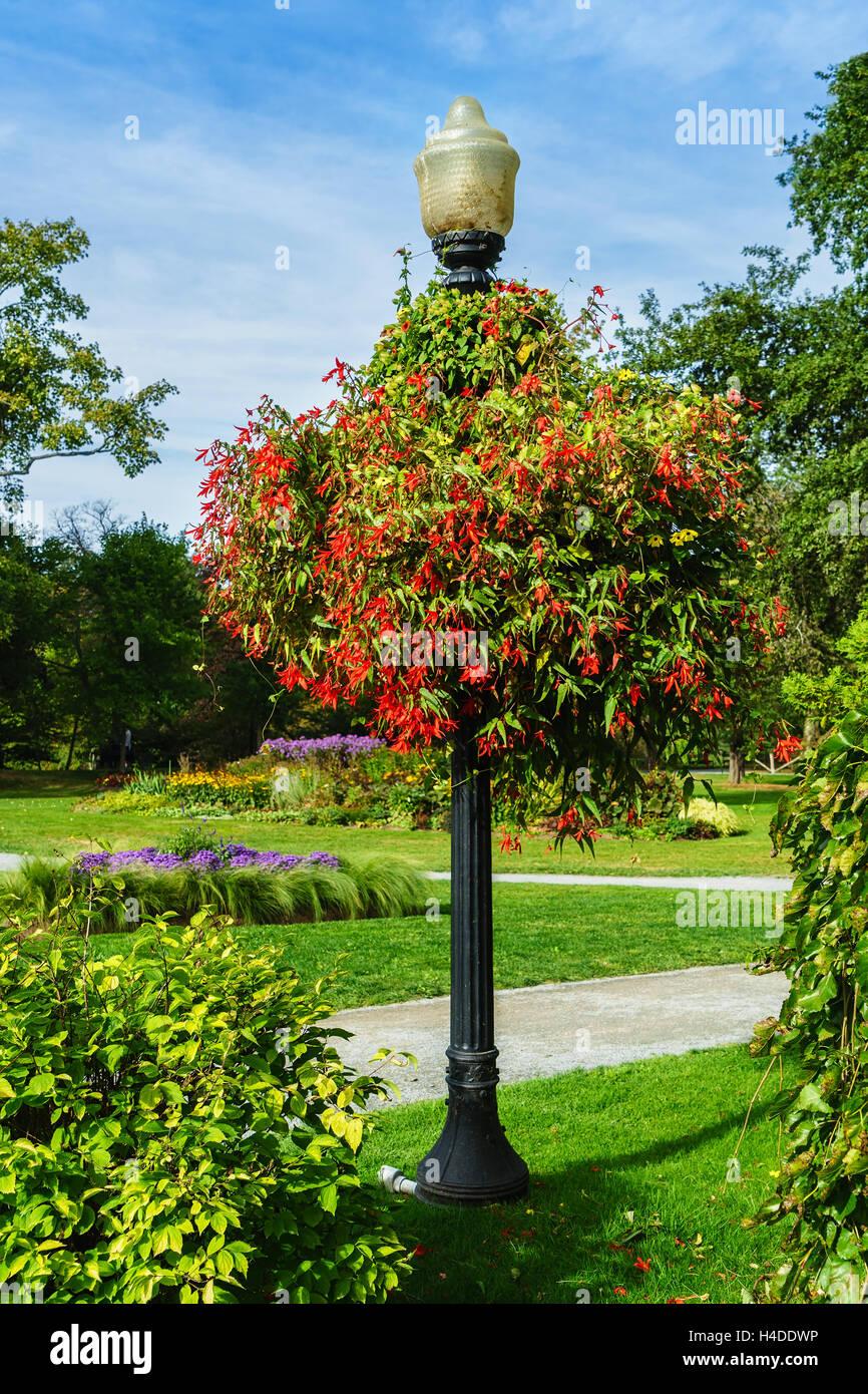 Large Begonia Hanging Basket In The Halifax Public Gardens ...