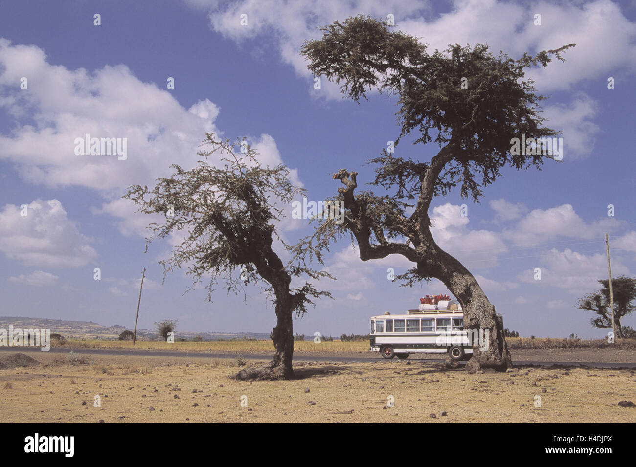 Ethiopia, close Addis Ababa, country road, regular bus, trees, Africa, north-east, Africa, Ityopia, south Ethiopia, - Stock Image