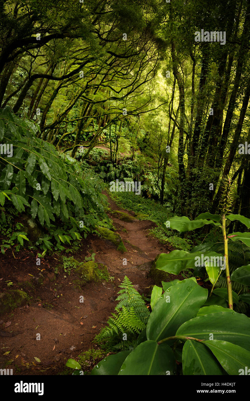 Path through the jungle on Sao Miguel, the Azores, Portugal - Stock Image