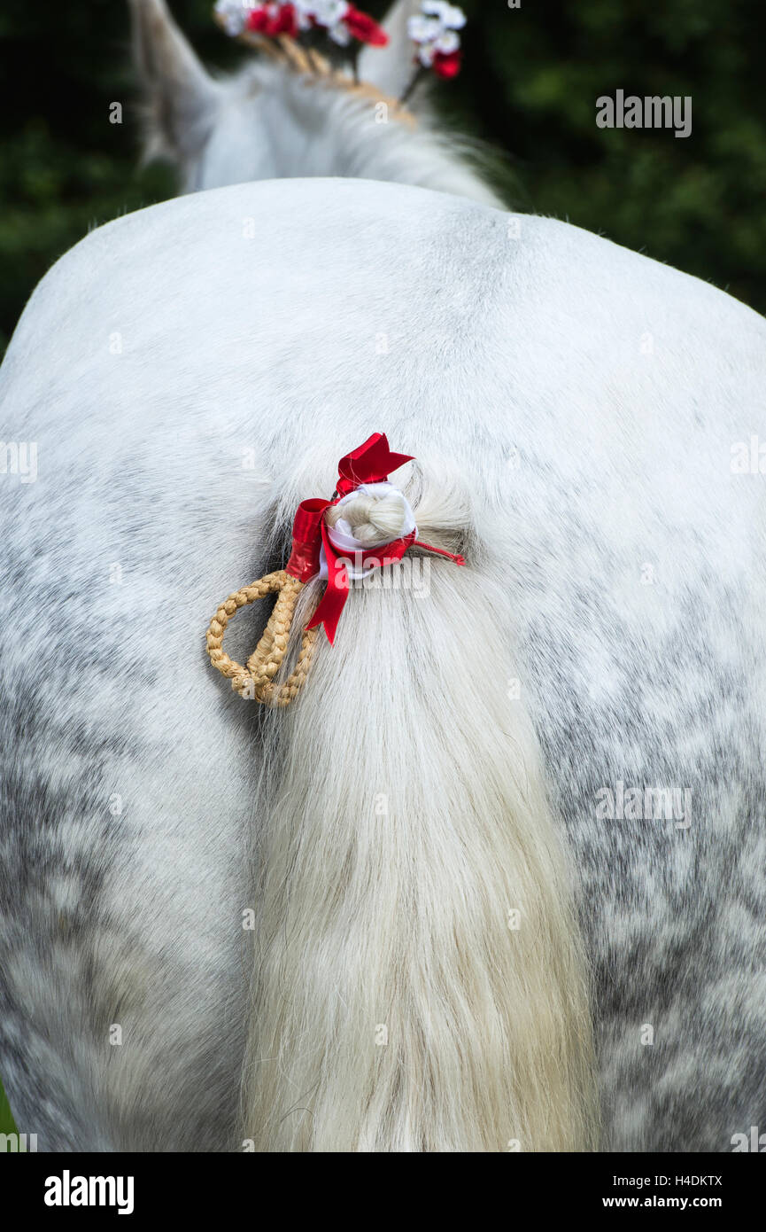 Percheron horse raffia tail plait at Weald and Downland open air museum, autumn countryside show, Singleton, Sussex, - Stock Image