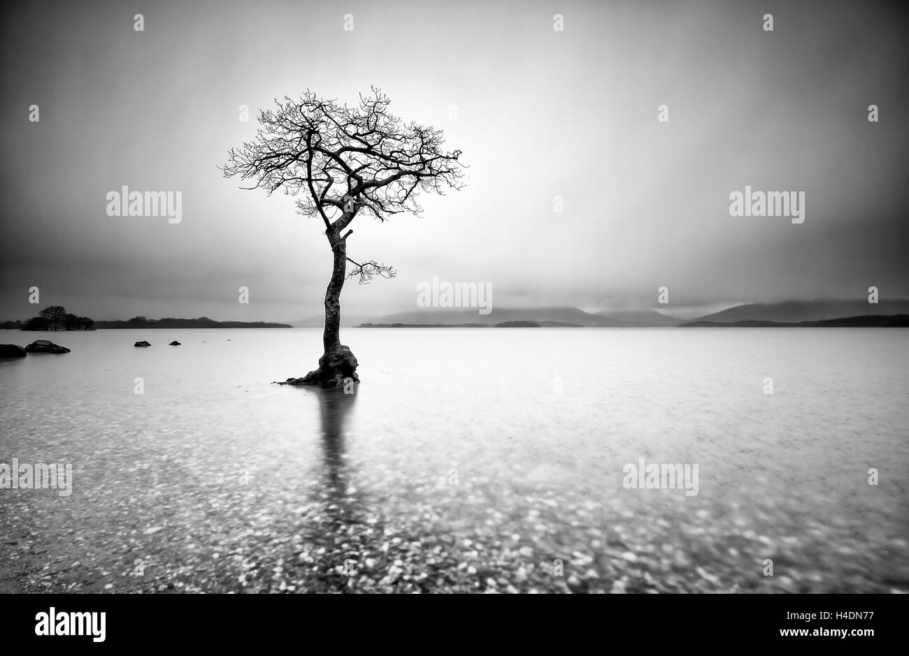 Lone tree in the water at Mallaig Bay on the shores of Loch Lomond in the Scottish Highlands on a winters day with - Stock Image