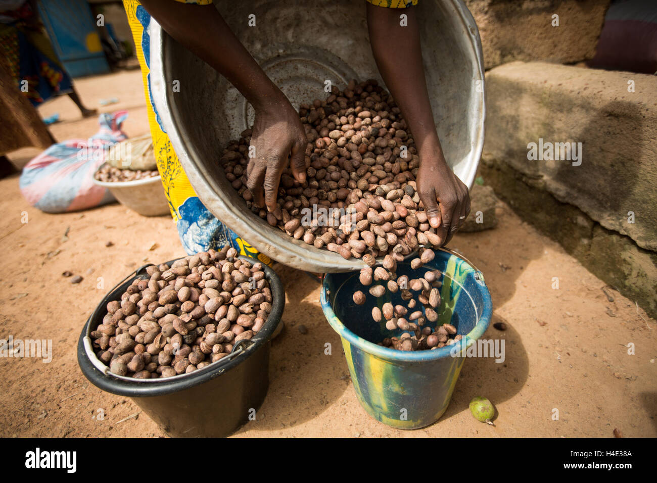 Shea nuts are partially processed by growers in their source village before being sent to a production center in - Stock Image