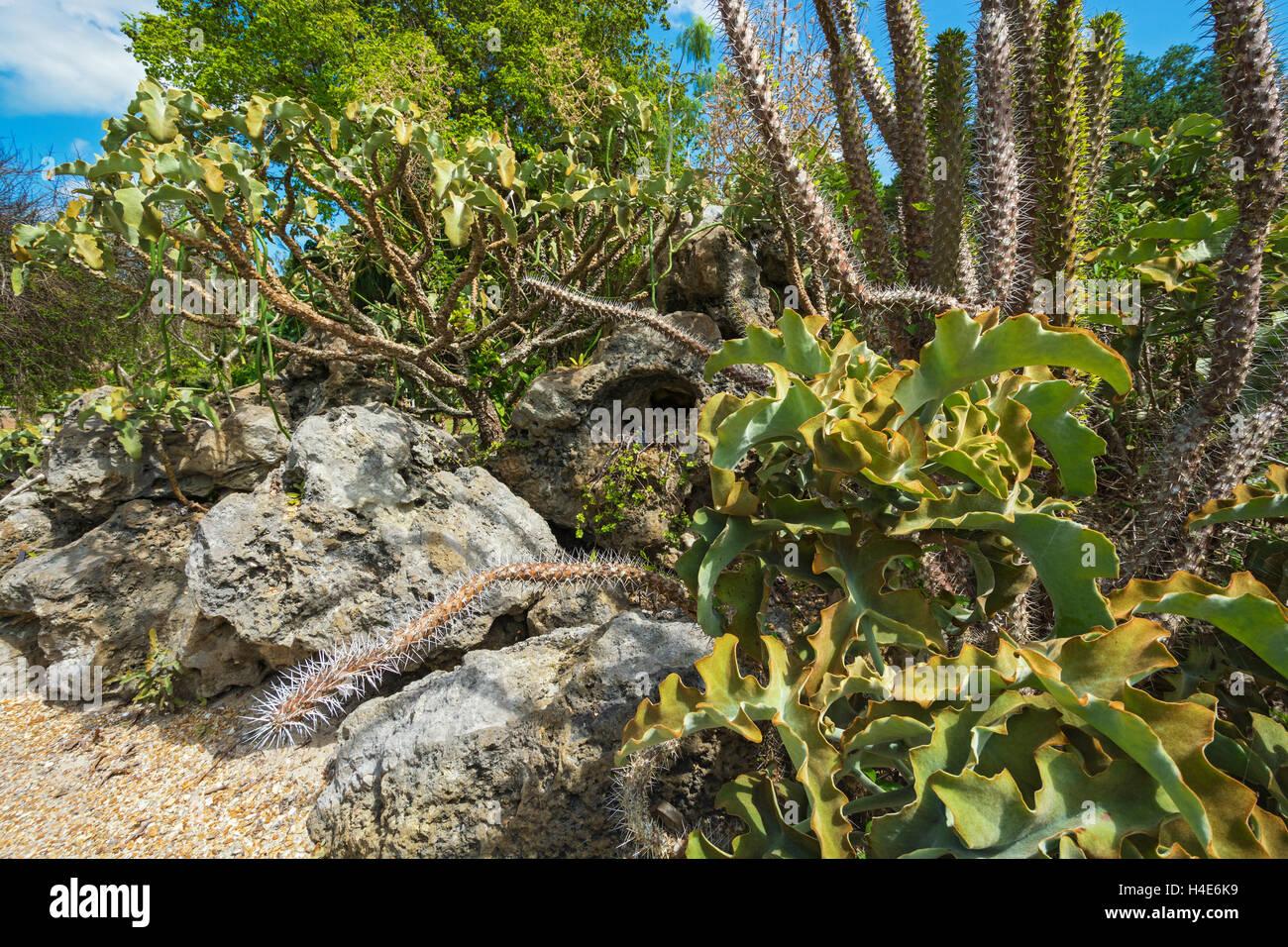 Florida, Coral Gables, Fairchild Tropical Botanic Garden, The Lin ...