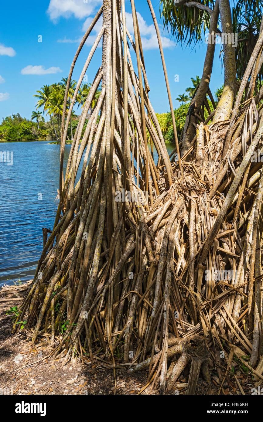 Florida, Coral Gables, Fairchild Tropical Botanic Garden, Mangrove ...