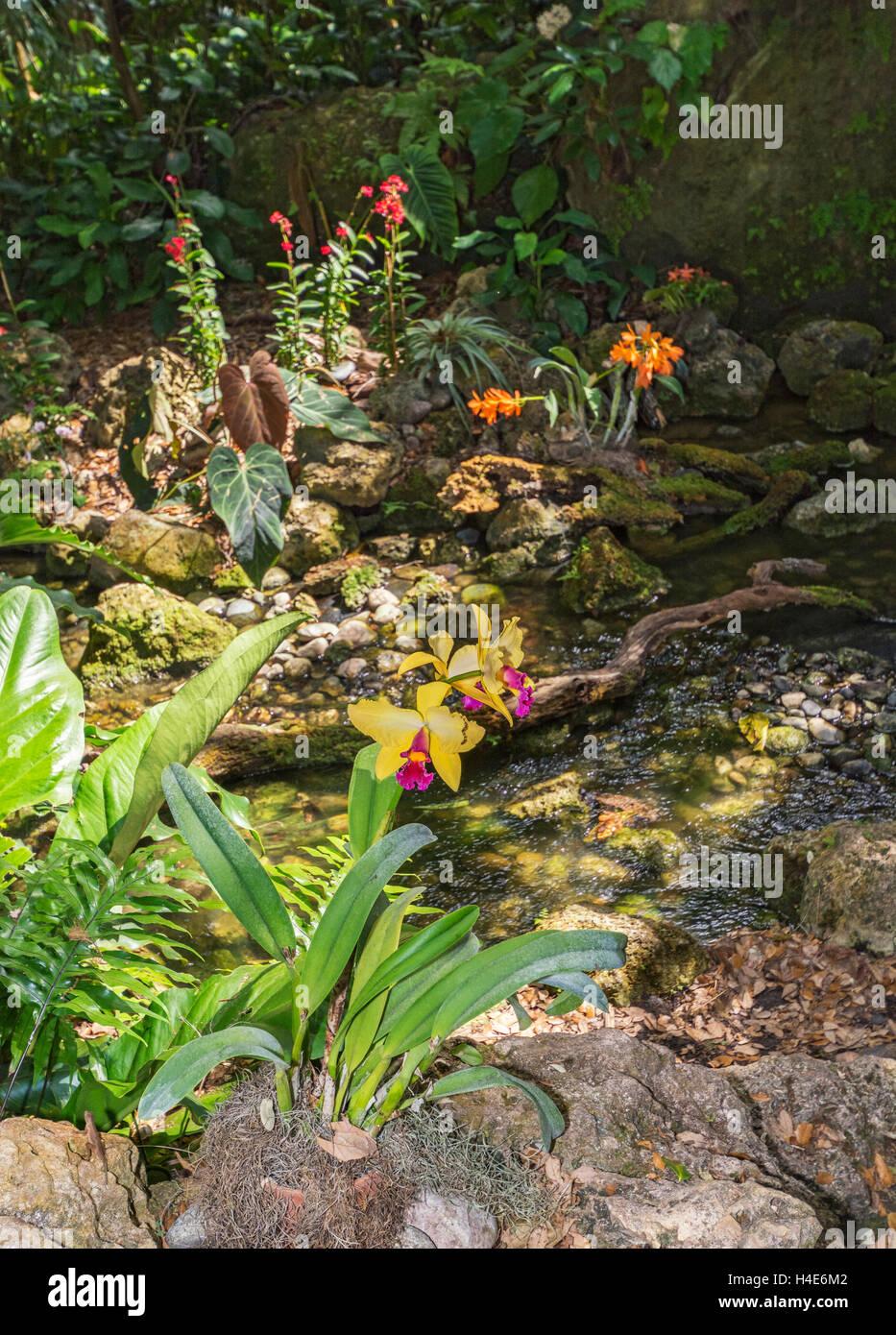Orchid Garden Florida Stock Photos & Orchid Garden Florida Stock ...
