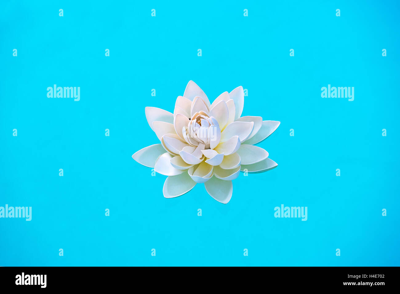 Single white water lily flower, Nymphaea, floating on fresh clear blue water in a concept of wellness or a spa - Stock Image