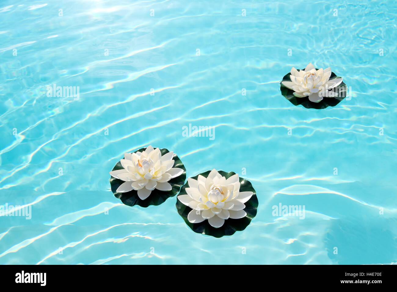 Floating Lotus Flowers Stock Photos Floating Lotus Flowers Stock