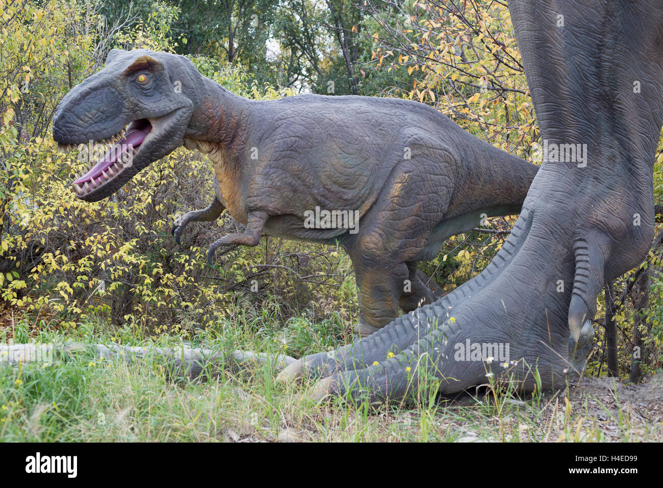 Tyrannosaurus rex baby beside foot of adult, dinosaur models at the Calgary Zoo prehistoric park - Stock Image