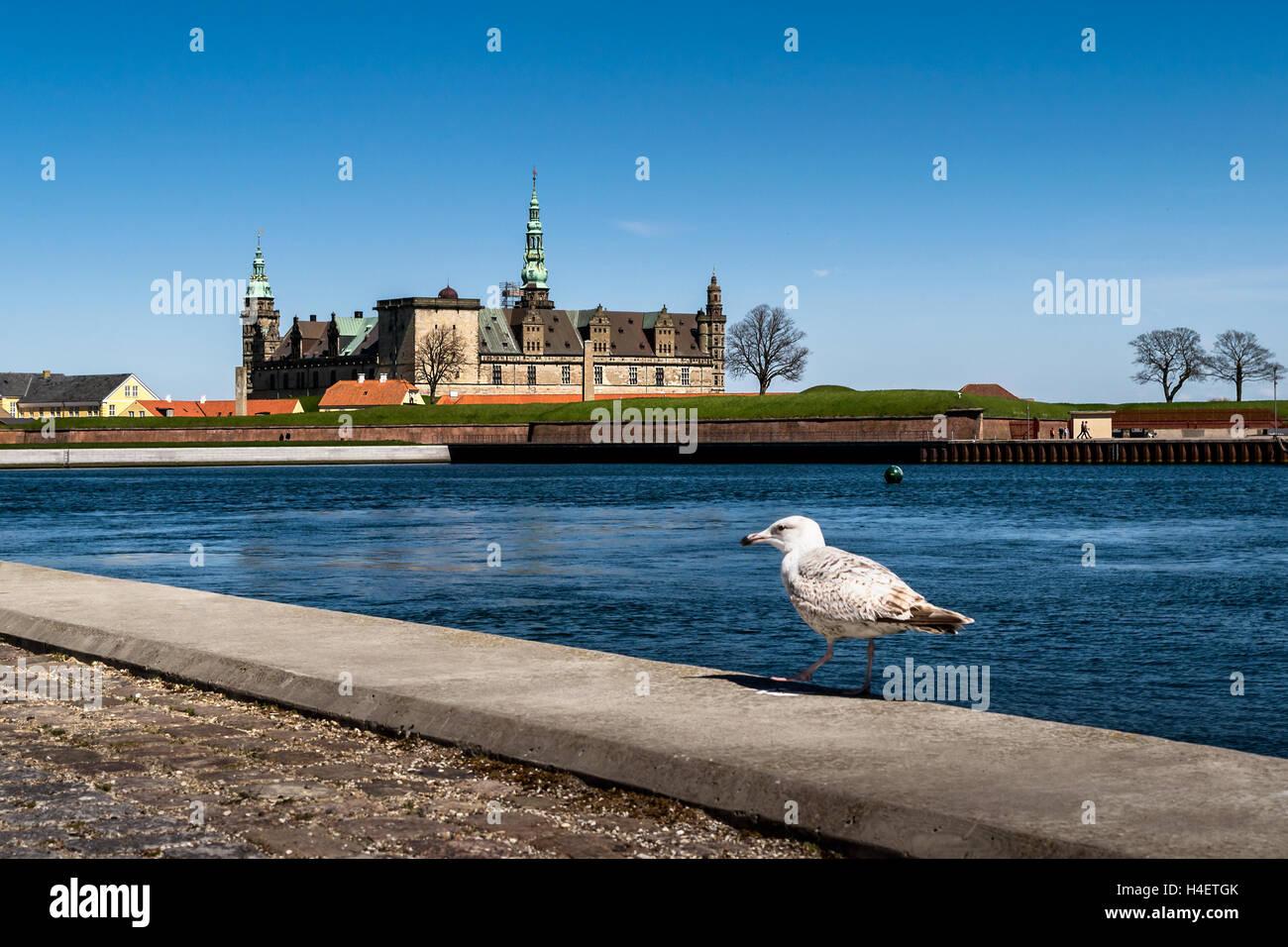 Kronborg Castle, residence of Hamlet, with a seagull in vew, settled in a town Helsingor, north of Copenhagen, Denmark - Stock Image
