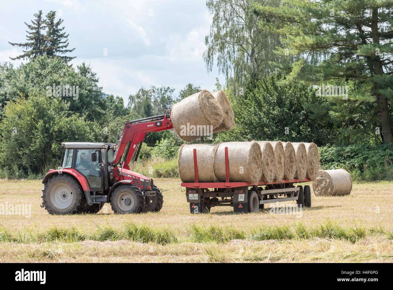 Tractor loading bails of hay onto a trailer in a field - Stock Image