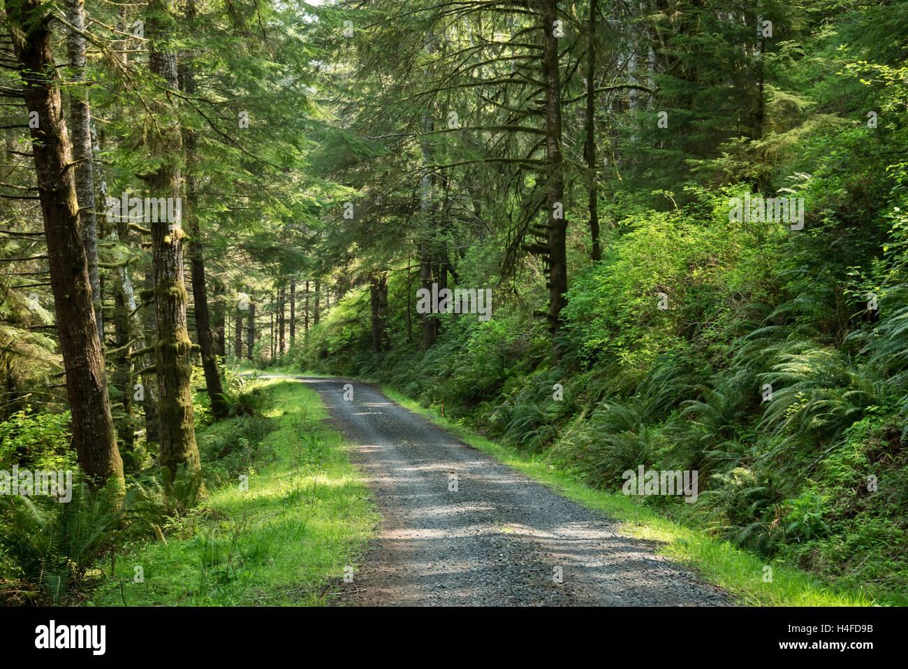 Forest Road 7500, Elliott State Forest, Coast Range Mountains, Oregon. - Stock Image