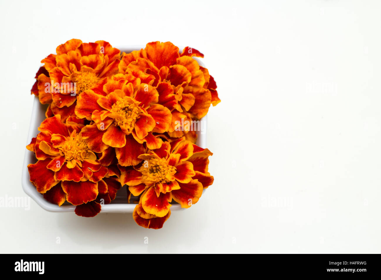 Orange and red marigold  edible flowers in a container, farm inspired Stock Photo