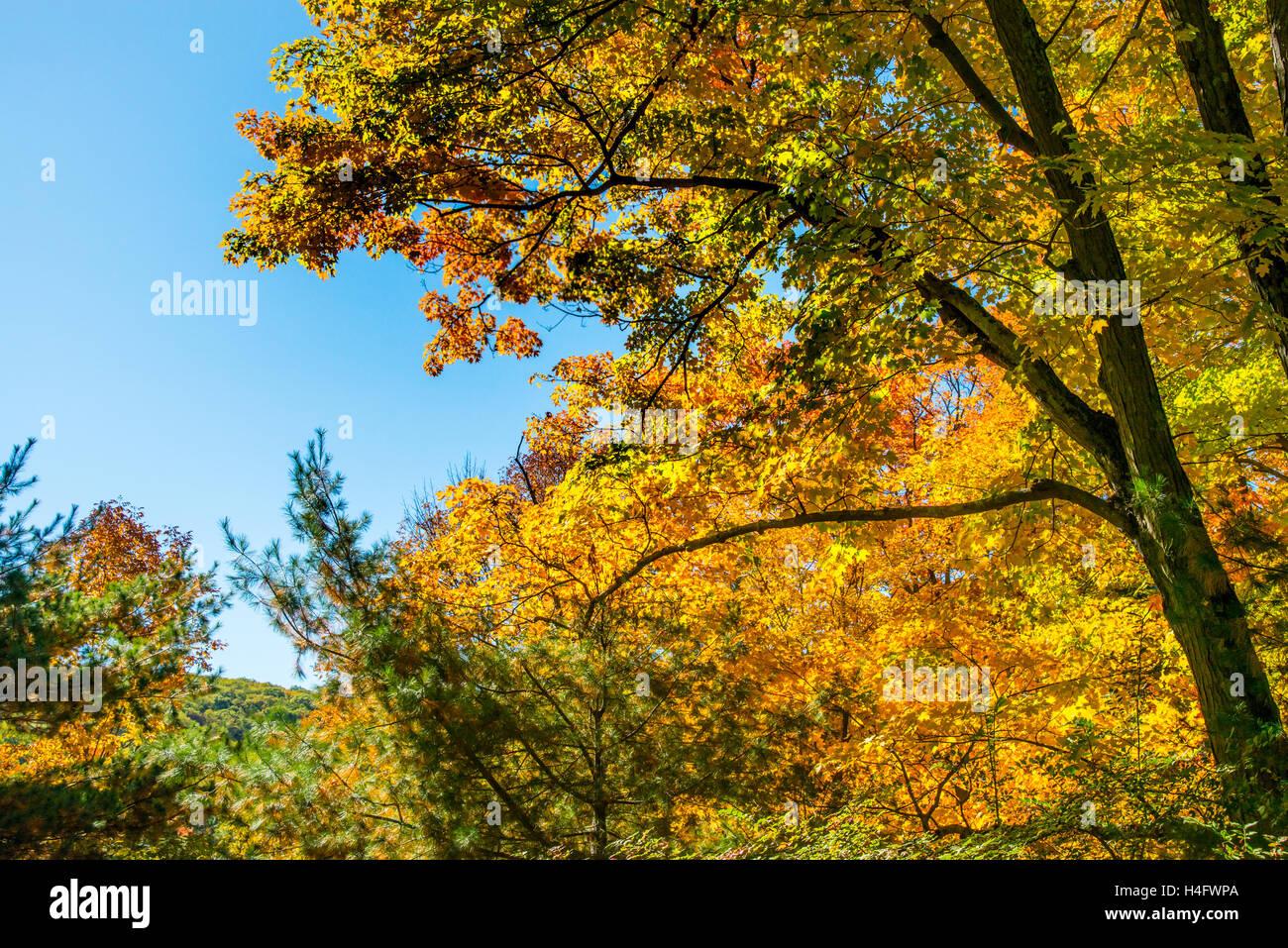 Fall Foliage Harriman State Park New York - Stock Image