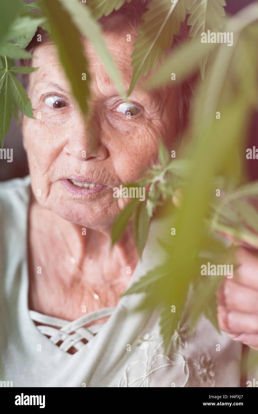 Shocked senior woman looking at Cannabis plant. - Stock Image