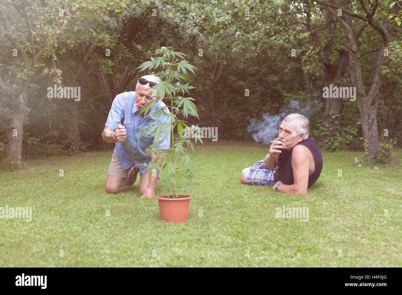 Two seniors smoking marijuana joint and relaxing next to the Cannabis plant outdoors in the garden. - Stock Image