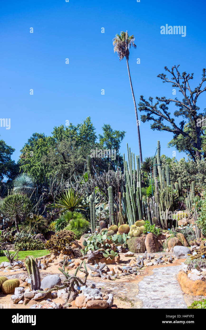Awesome Naples Italy The Cactus Section Of The Botanical Garden