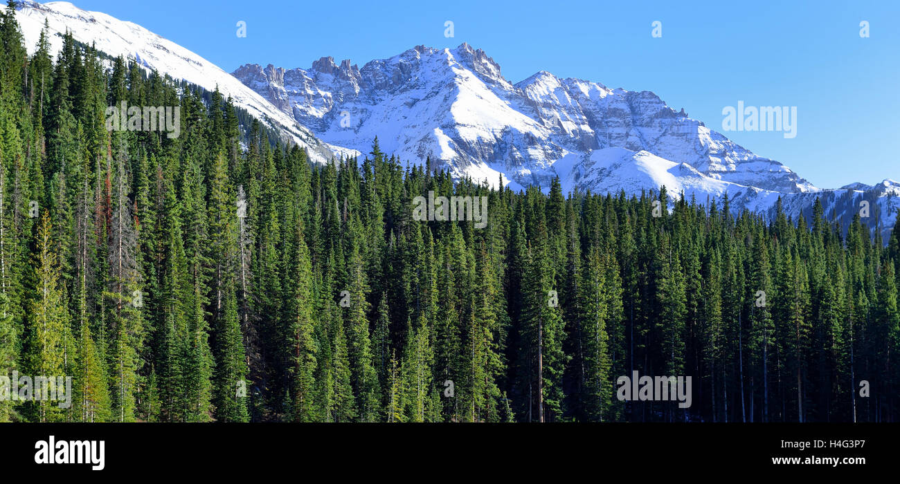 view of the snow covered mountains in the back of green conifer forest - Stock Image