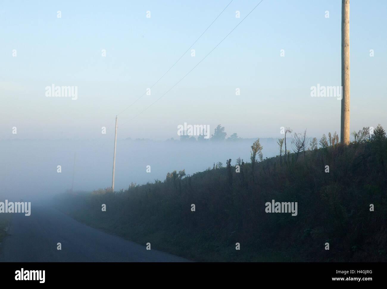 'Mist' Southern Illinois - Stock Image