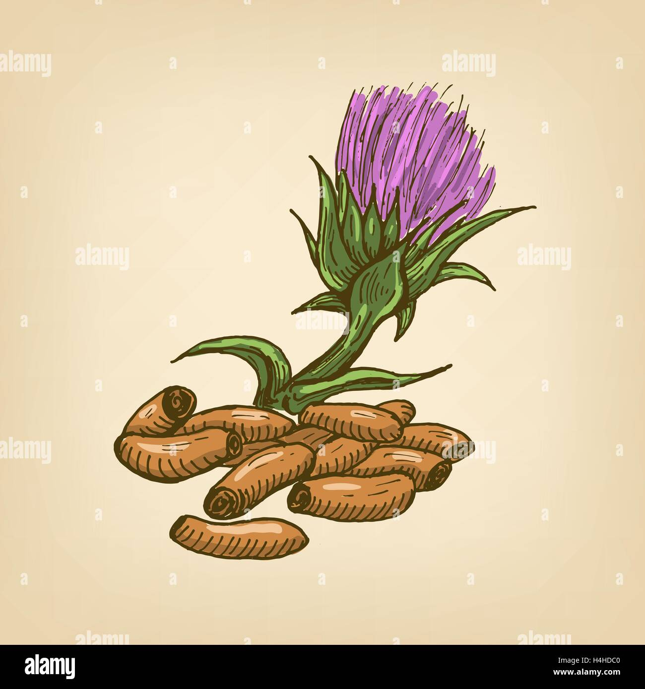 Seeds of a Milk Thistle with flower. Vector illustration - Stock Image
