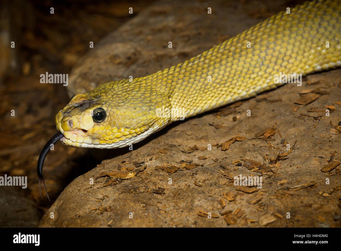 Reptilia Zoo Vaughan