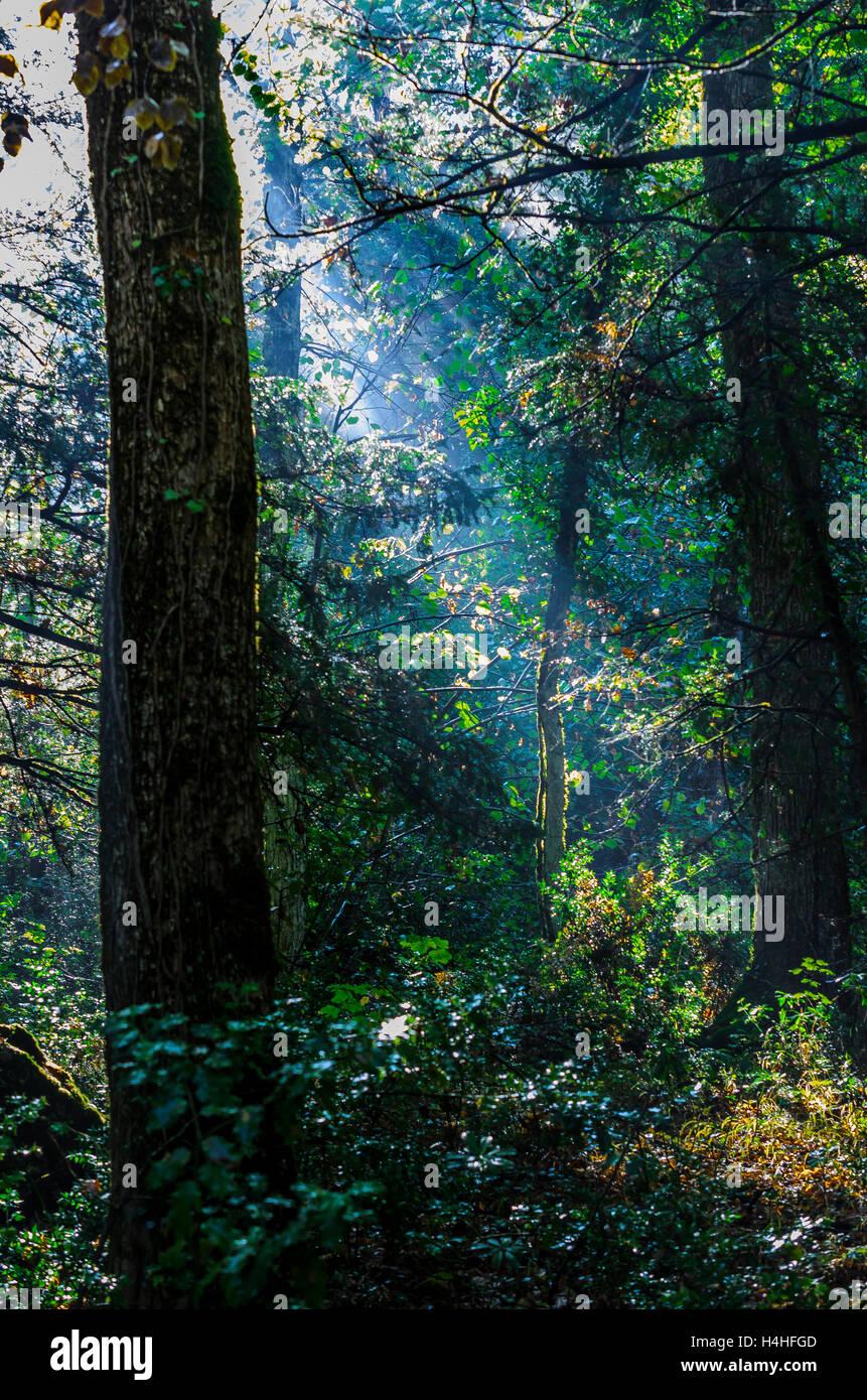 Forêt de Sainte Baume en automne, Var, France - Stock Image