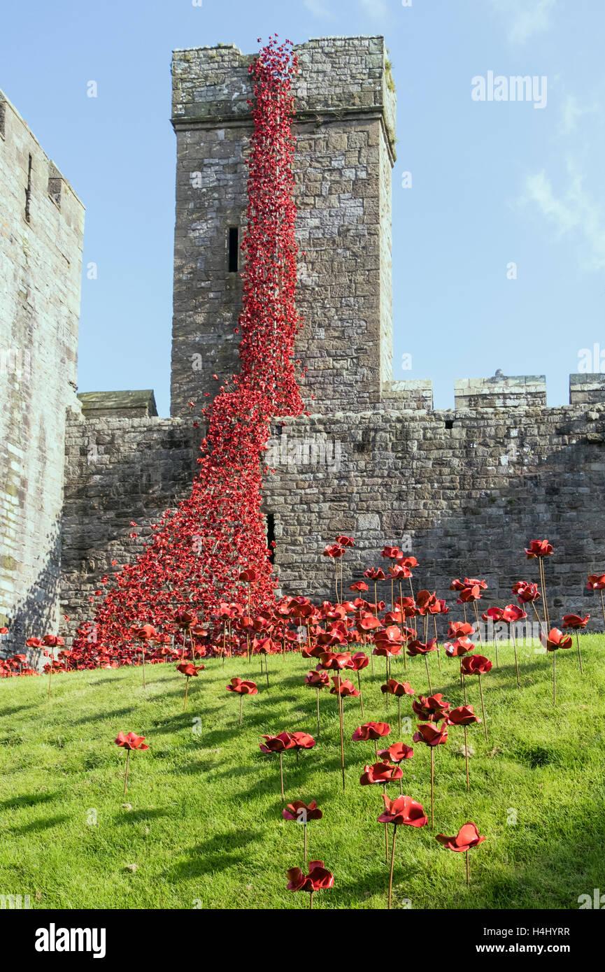 Weeping Window art sculpture of ceramic red poppies in Caernarfon castle walls. Caernarfon, Gwynedd, Wales, UK, - Stock Image