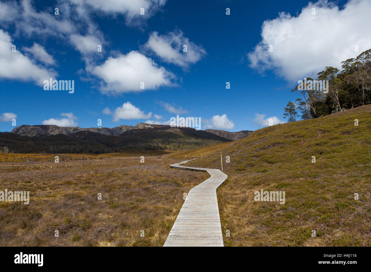 Wooden winding boardwalk in highlands of Cradle Mountain National park on bright sunny day. Tasmania, Australia - Stock Image