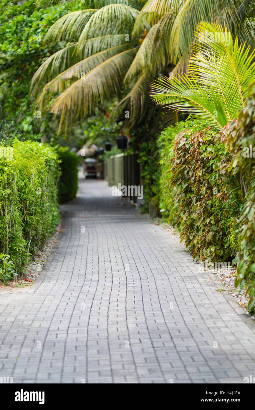 A small way into a hotel resort like a green tunnel with palm trees and selective focus. - Stock Image