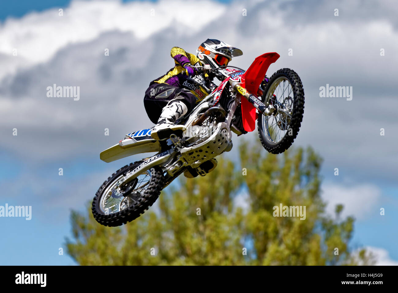 A member of the Bolddog Lings Freestyle Motocycle Display Team performs stunts at the 2015 Wilton House Classic - Stock Image