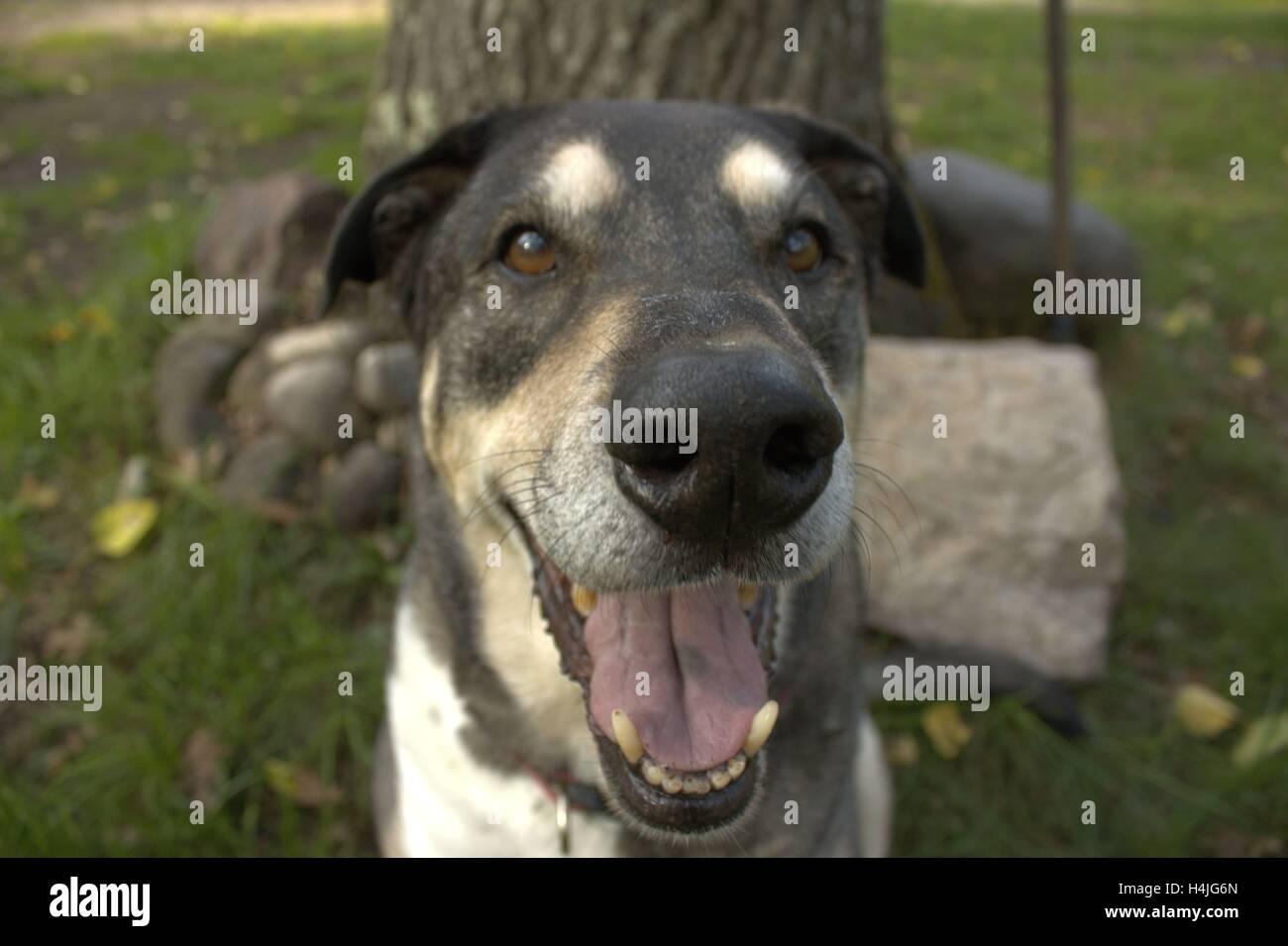 Ru Dog Laughing - Stock Image