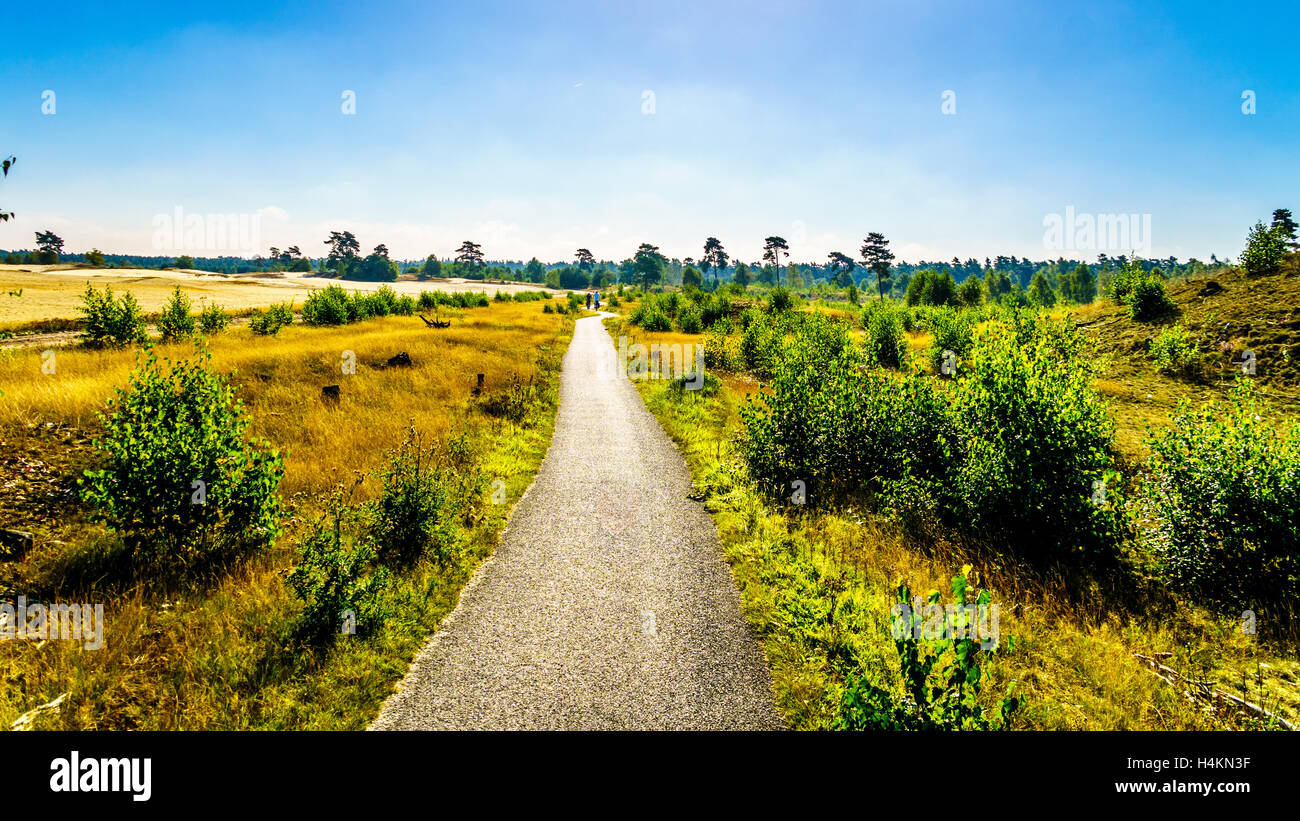 Path through Beekhuizerzand on the Veluwe in the Netherlands in the province of Gelderland. The largest sanddrift - Stock Image