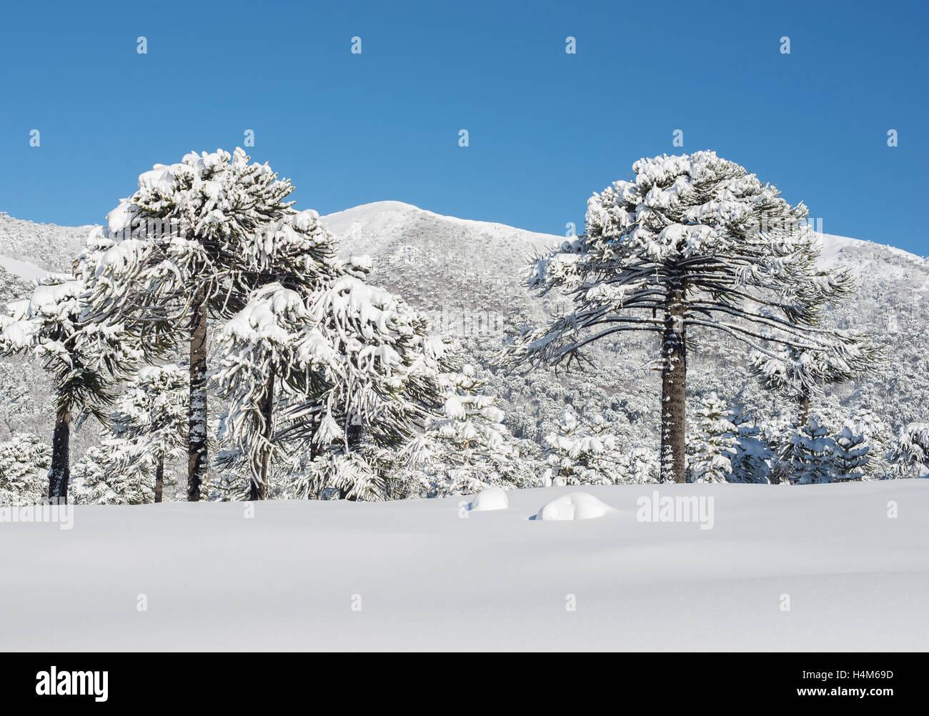 Invierno En Patagonia: Invierno Stock Photos & Invierno Stock Images