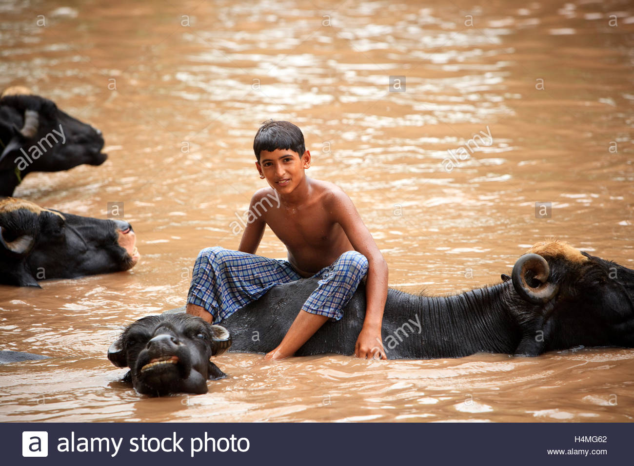 A boy sits on an ox in a muddy river near Lahore, Pakistan. - Stock Image