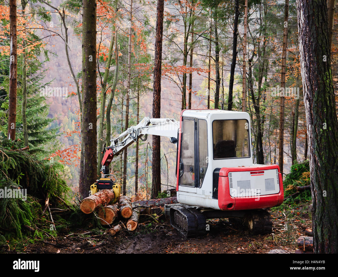 Machine tool operator to work in the forest - Stock Image