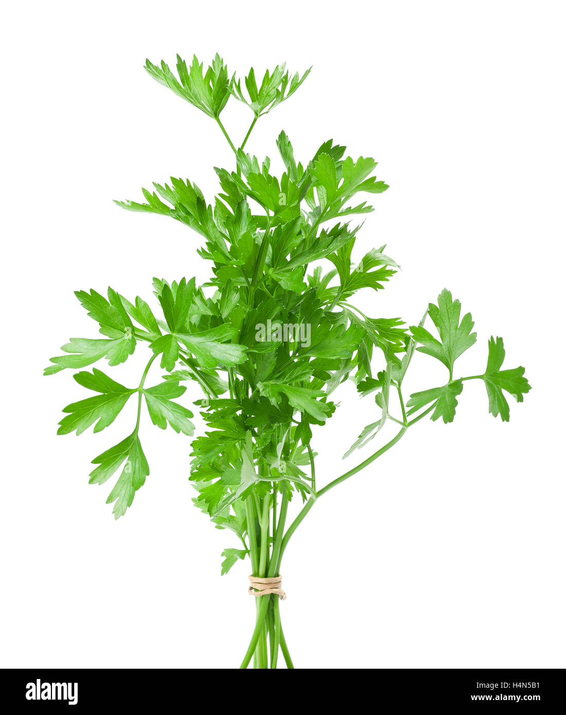 Parsley bunch  isolated on white - Stock Image